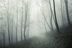 Foogy lasowego drzewa krajobraz z ścieżką Zdjęcia Stock