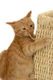 Foolish kitten Royalty Free Stock Photos