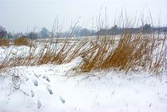 Foootsteps en nieve imagen de archivo libre de regalías