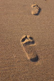 Fooprints - Stock Image. Footprints in the sand by the sea Royalty Free Stock Image