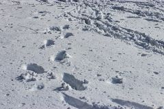 Foorprints und andere Drucke in vielem Schnee stockfotos