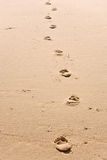 Foosteps to nowhere Royalty Free Stock Photography