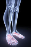 Foot Stock Image
