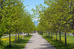 Foot avenue in the spring Royalty Free Stock Photography