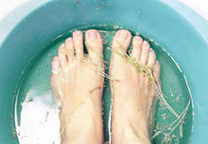 Foot bath in bowl with fir-needles and dried chamomile flowers Stock Photos