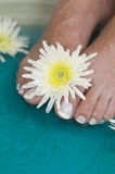Foot bath with herbs and flowers 4 Stock Images