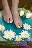 Foot bath with herbs and flowers 5 Stock Photography