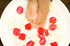 Foot Bath With Petals Royalty Free Stock Photos