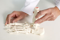 Foot bone Royalty Free Stock Image