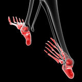 Foot bone Royalty Free Stock Photography