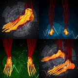 foot bone Royalty Free Stock Photos