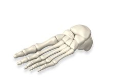Foot bones Stock Photography