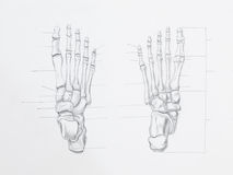 Foot bones pencil drawing. Detail of foot bones pencil drawing on white paper royalty free stock photography