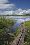 Foot-bridge. Siberia summer Royalty Free Stock Photos