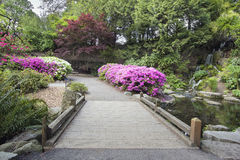 Foot Bridge across Waterfall Pond. At Crystal Springs Rhododendron Garden in Spring Season Stock Photography