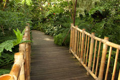 Foot bridge leading to a tropical trail. A foot bridge leading to a tropical trail Royalty Free Stock Image