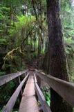 Foot Bridge at Marymere Falls. Footbridge at Marmere Falls in Olympic State park Washington Stock Photo