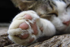 Foot of cat sleep stock images