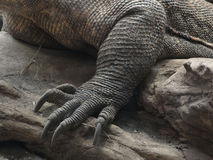 Foot and claws, detail,  Komodo Royalty Free Stock Photography