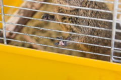 Foot degus Royalty Free Stock Photography