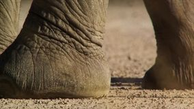 The foot of an elephant with a lot of texture and details stock photos