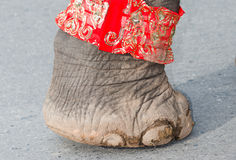 Foot of elephant Stock Photo