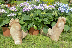 Foot in the flower Stock Photography