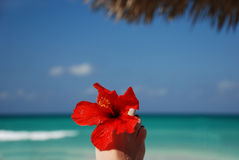 Foot with flower on a beach Royalty Free Stock Photography
