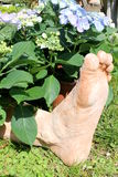 Foot in the flower. In garden stock image