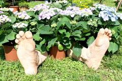 Foot in the flower. In garden stock photo