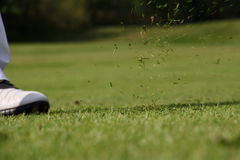 Foot of golfer on green. With grass flying in air after hitting ball Stock Photography