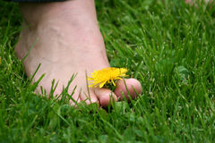 Foot on the grass Stock Images