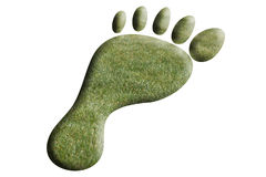 Foot of grass royalty free stock photo