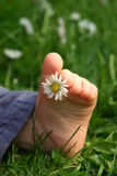 foot in grass Stock Photo