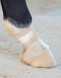 Foot of horse Stock Photography