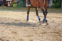 Foot of horse running on the sand. Close up of legs galloping stock image