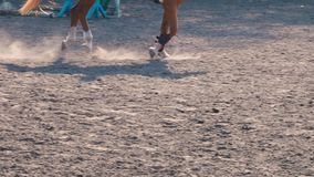 Foot of horse running on the sand at the training area, close-up of legs of stallion galloping on the ground, slow stock video