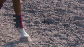Foot of horse walking along the sand at the training area, close-up of horse legs on the ground, slow motion. Foot of horse walking along the sand at the stock video