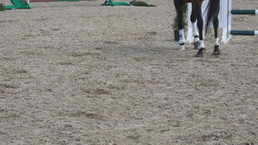 Foot of horse walking on the sand. Close up of legs going on the ground at manege at farm. Following for stallion. Close stock video