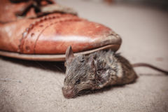 Foot kicking dead mouse Royalty Free Stock Photo