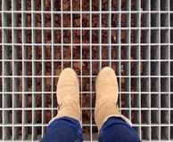 Foot and legs seen from above. Royalty Free Stock Images