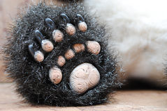 Foot of a Little panda toy. Closeup foot of a little panda toy Royalty Free Stock Photography