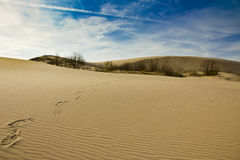 Foot marks on sand dunes of Silver Lake Stock Image