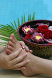 Foot massage. Thai style flower bath and foot massage Stock Images