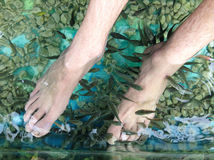 Foot massage, Cambodia Stock Photos