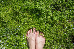 Foot on meadow stock photos