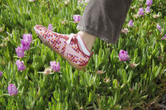 Foot in mid air. A woman's foot in sneakers caught in mid-air above a patch of wild flowers Royalty Free Stock Images