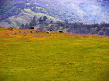 Foot of the mountain meadow Royalty Free Stock Photos