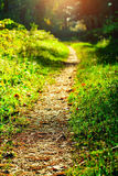 Foot path. In the forest Stock Image