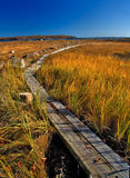 Foot Path. View of wooden foot path through marsh near the sea royalty free stock photos
